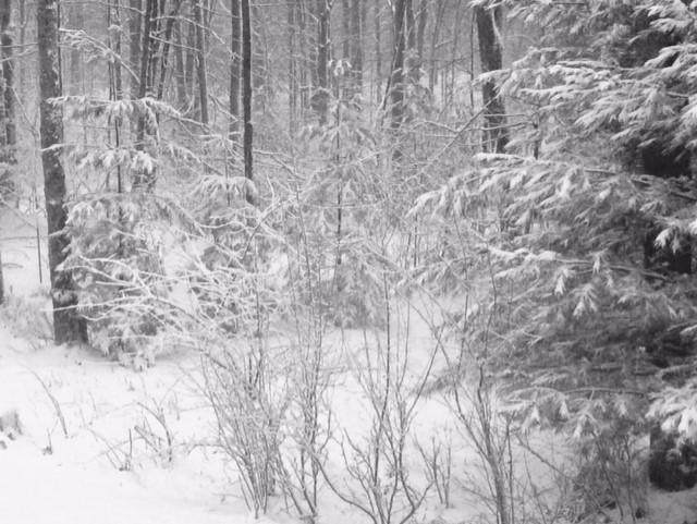 Feb snow d