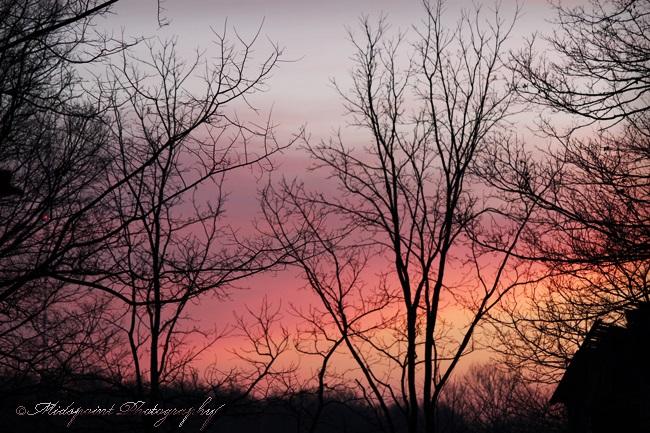 Dawn's silhouettes 2
