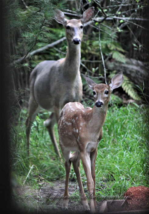Doe and Bambi 2